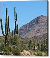 Saguaros And Mountain Acrylic Print