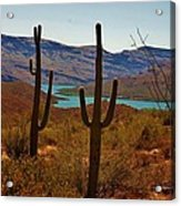 Saguaros In Arizona Acrylic Print