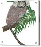 Tamarin Monkey Art Acrylic Print