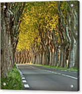 Saint Remy Trees Acrylic Print