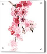 Sakura Flowers Watercolor Art Print Painting Acrylic Print