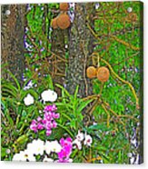 Sala Tree And Orchids At Buddhist University In Chiang Mai-thail Acrylic Print