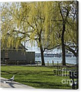 Salem Willow Trees Acrylic Print