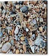 Sallie's Sea Shells Acrylic Print