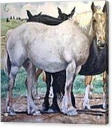 Sally's Horses Acrylic Print