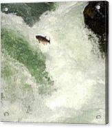Salmon Run 5 Acrylic Print by Mamie Gunning