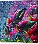 Salmon Run - Square - 2013-0103 Acrylic Print