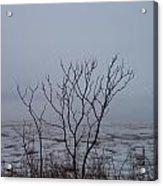 Salt Marsh Submerged In Fog Acrylic Print