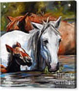 Salt River Foal Acrylic Print