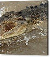 Saltwater Crocodile Acrylic Print