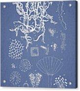 Salwater Algae Acrylic Print
