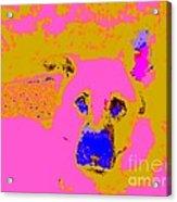 Sam 5144 10 Acrylic Print