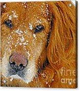 Pretty Red-head Acrylic Print