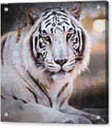 Samara 3 Acrylic Print