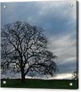 Same Tree Many Skies 10 Acrylic Print