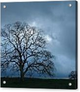 Same Tree Many Skies 14 Acrylic Print