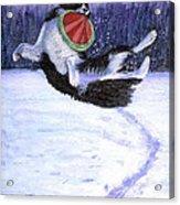 Sammy's Frisbee Jump Acrylic Print