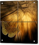 Sample Paneled Following The Light Yellow Butterfly Acrylic Print