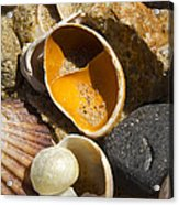 Sand Covered Shells Acrylic Print by Eugene Bergeron