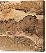 Sand Dog Acrylic Print
