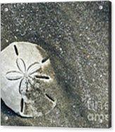 Sand Dollar On Boneyard Beach Acrylic Print