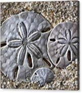 Sand Dollars 2106 Acrylic Print