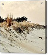 Sand Dunes At Penny Beach Acrylic Print