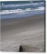 Sand Mogul On Florida Beach Acrylic Print