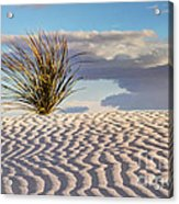 Sand Patterns And The Yucca Acrylic Print