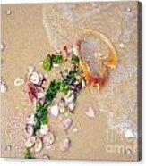 Sand Sea And Shells Acrylic Print