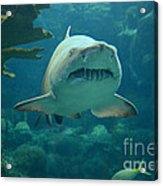 Sand Shark Acrylic Print