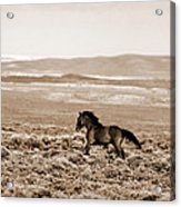 Sand Wash Mustang Acrylic Print