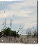 Delaware Sand Dune Acrylic Print