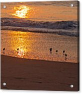 Sanderlings At Sunrise Acrylic Print