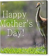 Sandhill Chick Mother's Day Card Acrylic Print