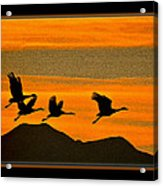 Sandhill Crane At Sunset Acrylic Print