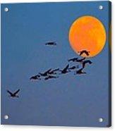 Sandhill Crane Migration Acrylic Print by Julie Dant