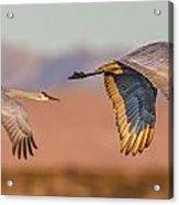 Sandhill Crane Pair Acrylic Print