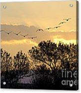 Sandhill Cranes Flying At Sunset Acrylic Print