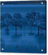 Sandhill Cranes In The Dark Bosque Del Apache Wildlife Refuge  Acrylic Print