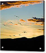 Sandhill Cranes In New Mexico Acrylic Print