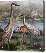 Sandhill Cranes On Alert Acrylic Print