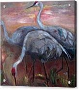 Sandhill Cranes Acrylic Print by Susan Hanlon