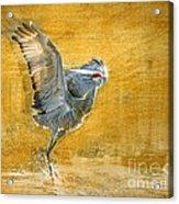 Sandhill Dancing Acrylic Print