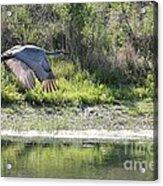 Sandhill Over The Pond Acrylic Print