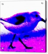 Sandpiper Abstract Acrylic Print