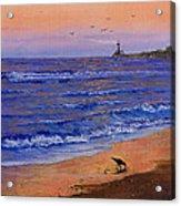 Sandpiper At Sunset Acrylic Print
