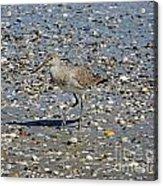 Sandpiper Galveston Is Beach Tx Acrylic Print