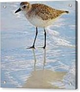 Sandpiper Reflection Acrylic Print
