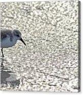 Sandpiper Reflections II Acrylic Print